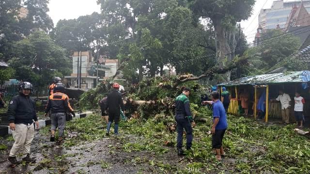 https: img-z.okeinfo.net content 2019 02 19 519 2020281 pohon-bertumbangan-di-malang-pasutri-tertimpa-hingga-luka-parah-H9Kcp5Bd8T.jpg