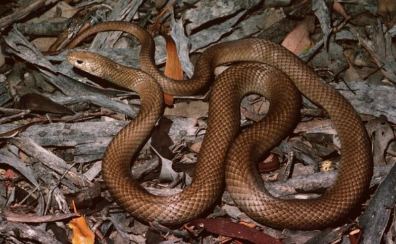 https: img-z.okeinfo.net content 2019 02 27 244 2023679 sempat-bermain-setelah-digigit-ular-nyawa-ismi-tidak-tertolong-LEMyqHEO6O.jpg
