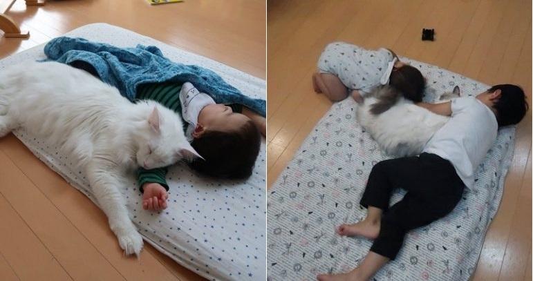 https: img-z.okeinfo.net content 2019 03 05 196 2026120 aksi-kucing-lucu-mengasuh-anak-anak-gemas-banget-lihatnya-hJCjYWlHoW.jpg