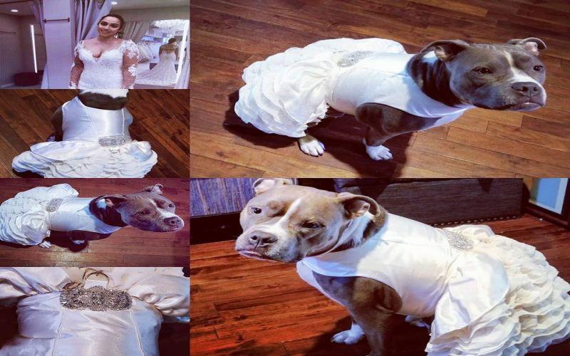 https: img-z.okeinfo.net content 2019 04 01 612 2037681 menikah-pengantin-wanita-belikan-busana-pengantin-lebih-mewah-untuk-anjingnya-4T8Sw5ZA9g.jpg