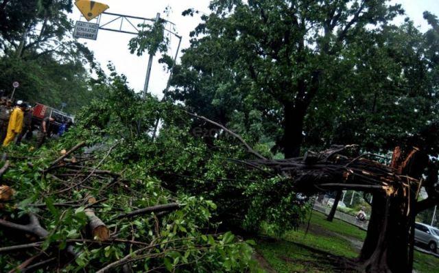 https: img-z.okeinfo.net content 2019 04 04 338 2038965 taman-margasatwa-ragunan-tanggung-biaya-korban-tertimpa-pohon-tumbang-5qDP7CovWT.jpg