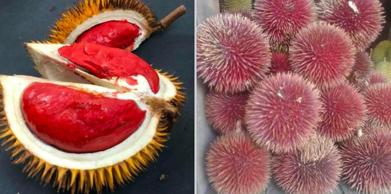 https: img-z.okeinfo.net content 2019 04 12 298 2042464 dari-sepetak-tanah-pria-asal-malaysia-punya-80-jenis-durian-n0ZkgSG6CI.png