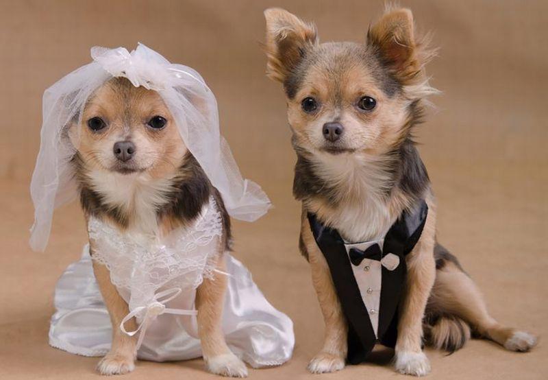 https: img-z.okeinfo.net content 2019 04 18 612 2045142 6-fakta-menarik-tentang-hormon-cinta-pada-hewan-2AmdjjcpFA.jpg