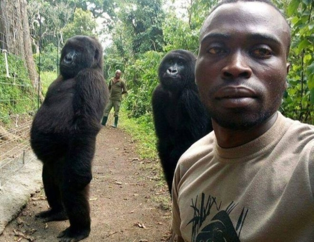 https: img-z.okeinfo.net content 2019 04 22 18 2046538 mirip-manusia-gorila-ini-bergaya-saat-swafoto-m48IaRp2MK.jpg