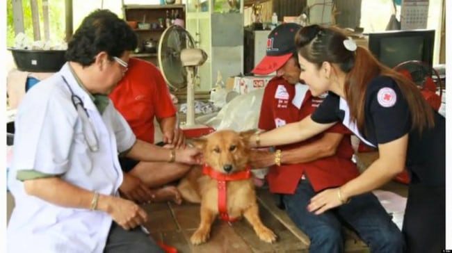 https: img-z.okeinfo.net content 2019 04 22 612 2046705 5-kisah-heroik-anjing-selamatkan-bayi-dari-kematian-2zmMfzIwGt.jpg