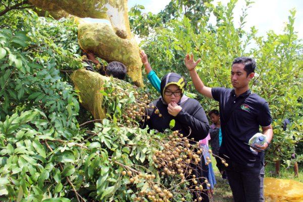 https: img-z.okeinfo.net content 2019 04 23 298 2047175 mencicipi-kelengkeng-rasa-durian-di-desa-sigit-NaZlKmqOrq.jpg