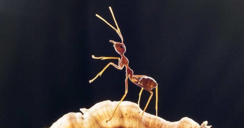 https: img-z.okeinfo.net content 2019 04 25 338 2048133 warga-tangerang-tewas-setelah-digigit-semut-Hjeg1vKCal.jpg
