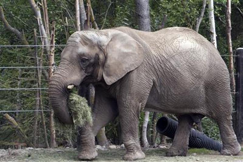 https: img-z.okeinfo.net content 2019 05 16 18 2056514 populasi-berlebih-zimbabwe-jual-hampir-100-gajah-ke-china-dan-uni-emirat-arab-vq2wSdFjKL.jpg