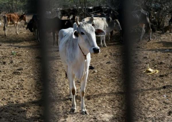 https: img-z.okeinfo.net content 2019 05 17 18 2057103 seorang-pria-muslim-tewas-dalam-kekerasan-terkait-sapi-di-india-Ia14a8IGFn.jpg