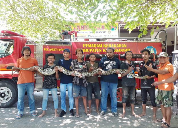 https: img-z.okeinfo.net content 2019 05 19 512 2057587 ular-piton-4-meter-sembunyi-di-saluran-air-gegerkan-warga-e2WsRCWRl3.png