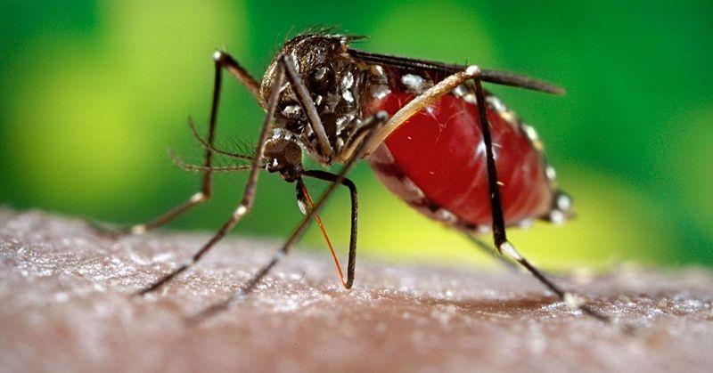https: img-z.okeinfo.net content 2019 05 25 519 2060294 5-warga-ngawi-meninggal-akibat-demam-berdarah-dengue-tNy5ko14YH.jpg