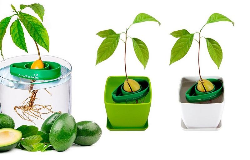 https: img-z.okeinfo.net content 2019 05 31 298 2062651 pohon-alpukat-mini-khusus-anak-anak-baik-untuk-tumbuh-kembangnya-WalcSivUEr.jpg