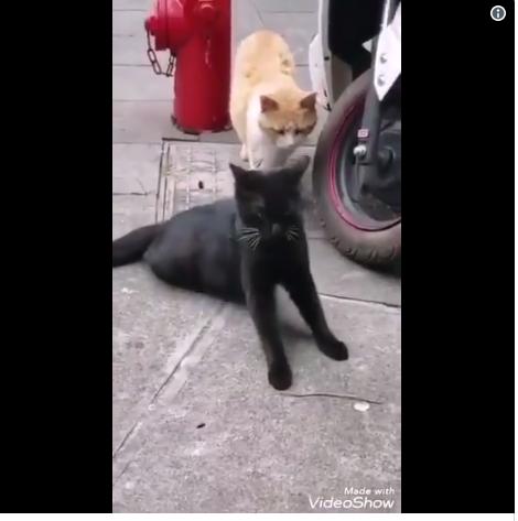 https: img-z.okeinfo.net content 2019 06 06 196 2064209 kucing-ini-ngenes-banget-pas-diselingkuhi-hewan-sekarang-kok-drama-banget-sih-PqsEEmZLif.png
