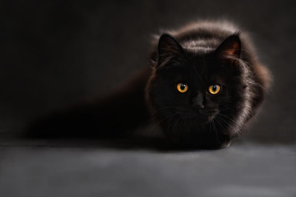https: img-z.okeinfo.net content 2019 06 11 612 2065266 takut-dimandikan-kucing-ini-teriak-sebut-nama-agus-4QbU1RKeJx.jpg