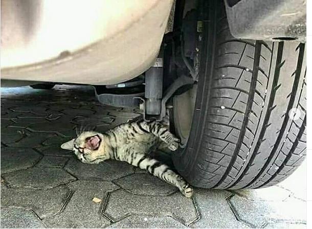https: img-z.okeinfo.net content 2019 06 12 612 2065675 aksi-kucing-prank-kelindes-mobil-bikin-geger-netizen-PlHEBd1bAz.jpg