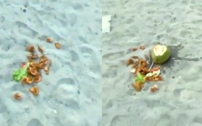 https: img-z.okeinfo.net content 2019 06 13 608 2066080 viral-wisatawan-pantai-jono-buang-makanan-seharga-rp285-ribu-4wDT29Fzw6.jpg