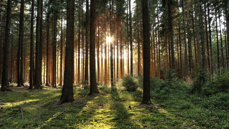 https: img-z.okeinfo.net content 2019 06 16 406 2067072 ingin-menikmati-hutan-di-jakarta-bisa-kok-FbKeuVjrth.jpg