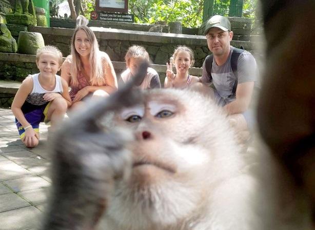 https: img-z.okeinfo.net content 2019 06 19 406 2068319 selfie-bareng-turis-monyet-bali-ini-acungkan-jari-tengah-OrfXyKRhO7.jpg