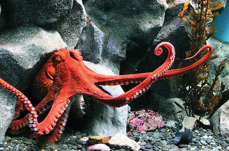 https: img-z.okeinfo.net content 2019 06 19 406 2068353 mengenal-3-spesies-baru-hewan-laut-dalam-di-jakarta-KqsbupuYfb.jpg