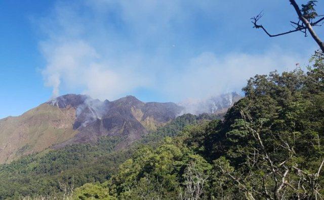 https: img-z.okeinfo.net content 2019 06 24 340 2070371 141-6-hektare-kawasan-hutan-gunung-rinjani-terbakar-hkDLekEhuO.jpg