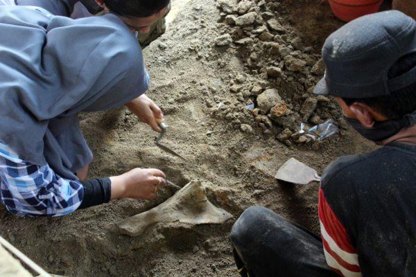 https: img-z.okeinfo.net content 2019 07 01 512 2073095 149-fosil-binatang-purba-ditemukan-di-tepi-bengawan-solo-tL21v8EAjy.jpg