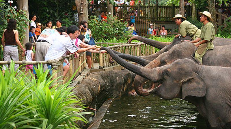 https: img-z.okeinfo.net content 2019 07 04 406 2074694 ditargetkan-jadi-tempat-wisata-80-kebun-binatang-wajib-sertifikasi-tahun-depan-YMK3iw72Zi.jpg