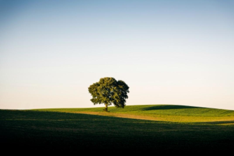 https: img-z.okeinfo.net content 2019 07 07 56 2075569 bumi-miliki-ruang-untuk-1-triliun-pohon-bisa-atasi-perubahan-iklim-KDdQonG4xg.jpg