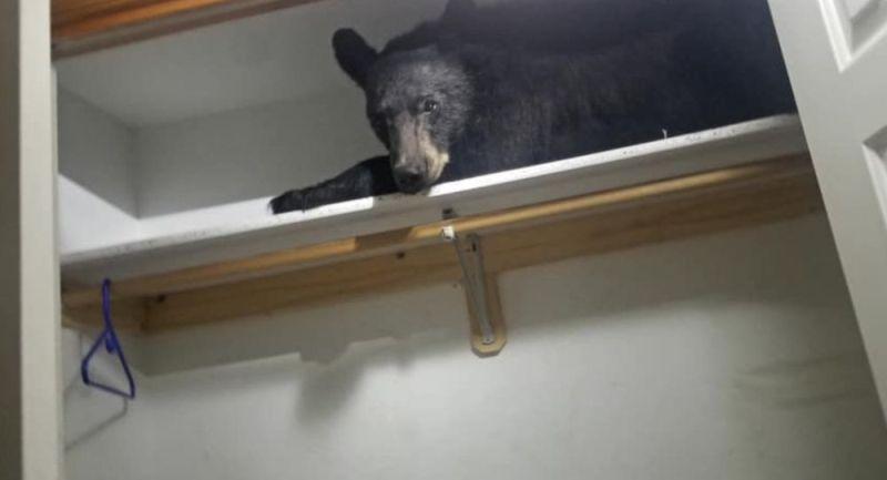 https: img-z.okeinfo.net content 2019 07 09 18 2076727 keluarga-di-as-terkejut-menemukan-beruang-tidur-di-lemari-pakaiannya-7R1Cv6Ycd2.jpg