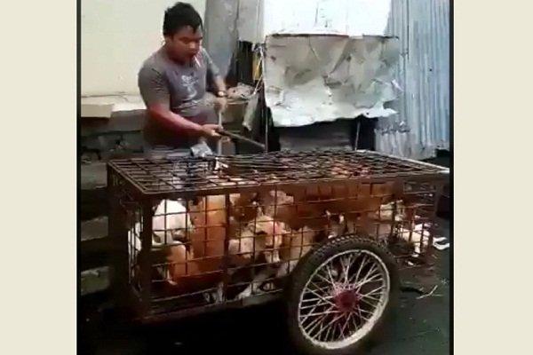 https: img-z.okeinfo.net content 2019 07 10 512 2077127 ramai-video-penyiksaan-anjing-diduga-di-solo-ini-kata-wali-kota-rudy-urQJROSXi3.jpg