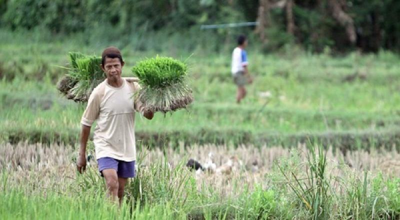 https: img-z.okeinfo.net content 2019 07 13 1 2078351 ini-manfaat-alsintan-rice-transplanter-untuk-pertanian-WqrtWNITJZ.jpg