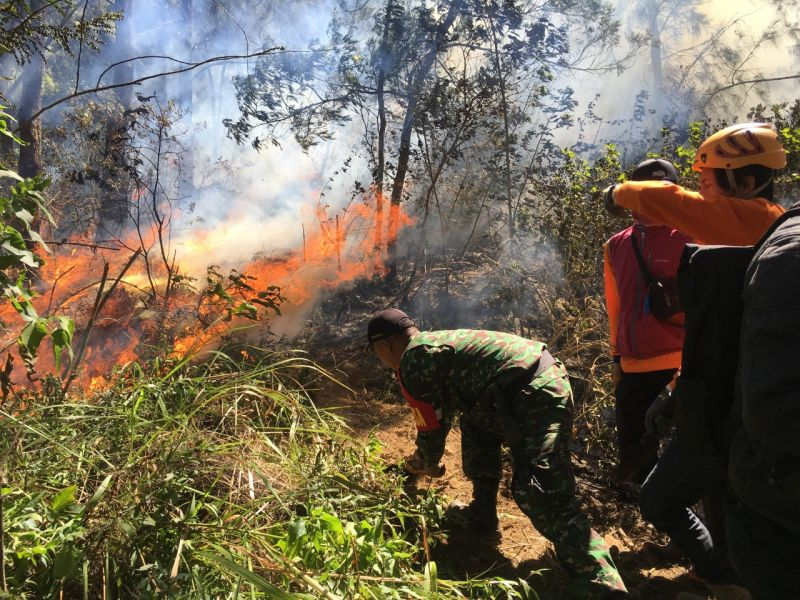 https: img-z.okeinfo.net content 2019 07 23 519 2082388 kebakaran-hutan-gunung-panderman-meluas-hingga-60-hektar-drSzXKY7Gy.jpg