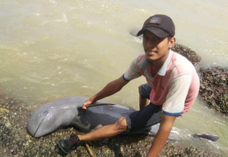 https: img-z.okeinfo.net content 2019 07 25 340 2083344 bangkai-lumba-lumba-terdampar-di-bibir-pantai-pulau-penibung-bBvhEG3tGN.jpg