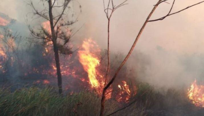 https: img-z.okeinfo.net content 2019 08 02 519 2086891 kebakaran-hutan-gunung-welirang-padam-petugas-masih-bersiaga-di-lokasi-dLA7fb70QI.JPG