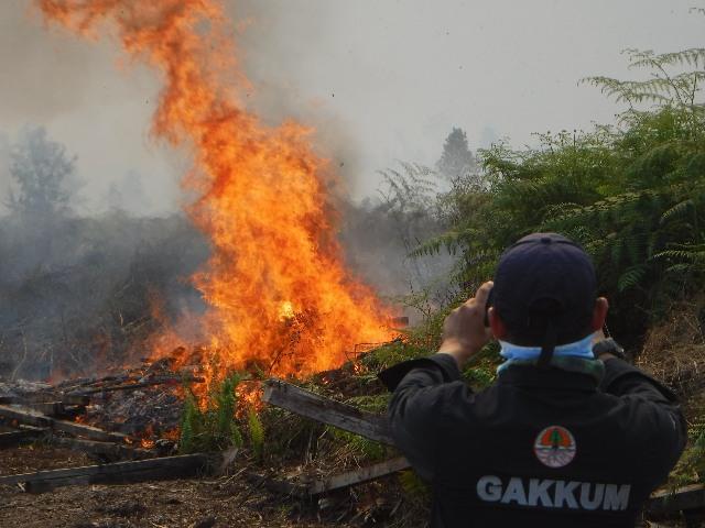 https: img-z.okeinfo.net content 2019 08 03 337 2087301 bakar-lahan-seluas-274-hektare-di-kubu-raya-seorang-pria-ditangkap-cmWJGfml0m.jpg