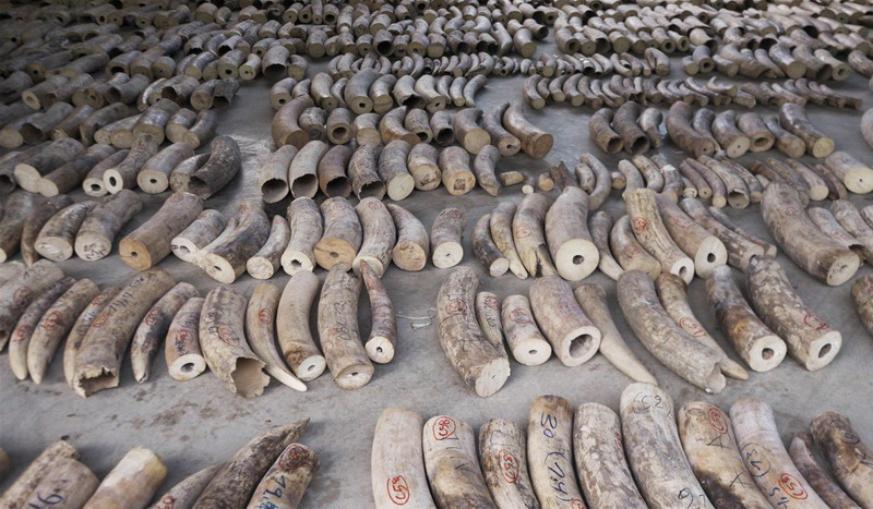 https: img-z.okeinfo.net content 2019 08 13 18 2091513 peringati-hari-gajah-sedunia-singapura-larang-total-perdagangan-gading-mulai-2021-wyRtBvUUbT.jpg