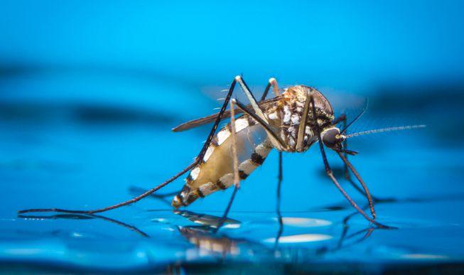https: img-z.okeinfo.net content 2019 08 22 481 2095188 hari-nyamuk-sedunia-kenali-jenis-nyamuk-dan-penyakit-yang-dibawanya-ngXC2ptk8q.jpg