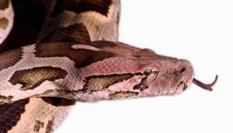 https: img-z.okeinfo.net content 2019 08 23 481 2095595 sekuriti-tangerang-tewas-digigit-ular-welang-harusnya-ini-pertolongan-pertamanya-1hNVUdJIDA.jpg