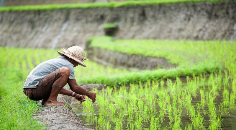 https: img-z.okeinfo.net content 2019 09 02 320 2099656 daya-beli-petani-naik-kecuali-untuk-sektor-perkebunan-s9k3L5Ek8y.jpg
