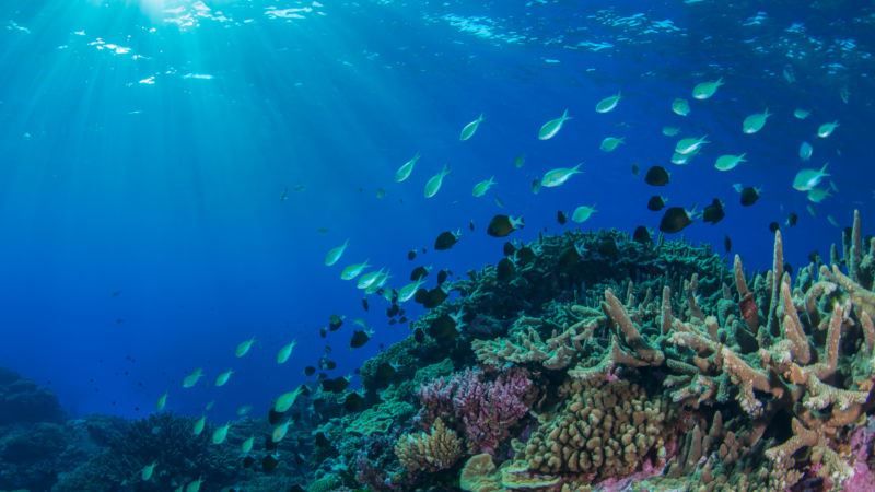 https: img-z.okeinfo.net content 2019 09 02 56 2099687 peningkatan-suhu-laut-ancam-organisme-dan-terumbu-karang-a27HUWmOCn.jpg