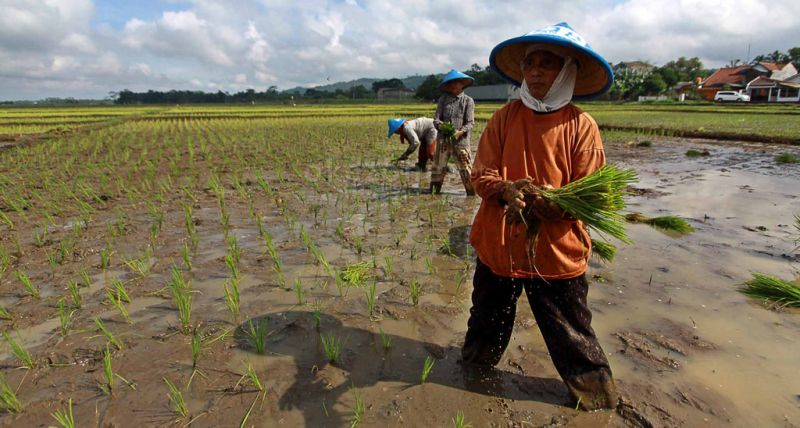 https: img-z.okeinfo.net content 2019 09 12 1 2104024 pembangunan-di-sektor-pertanian-sukses-dengan-melejitnya-ekspor-2fp7XpNBUc.jpg