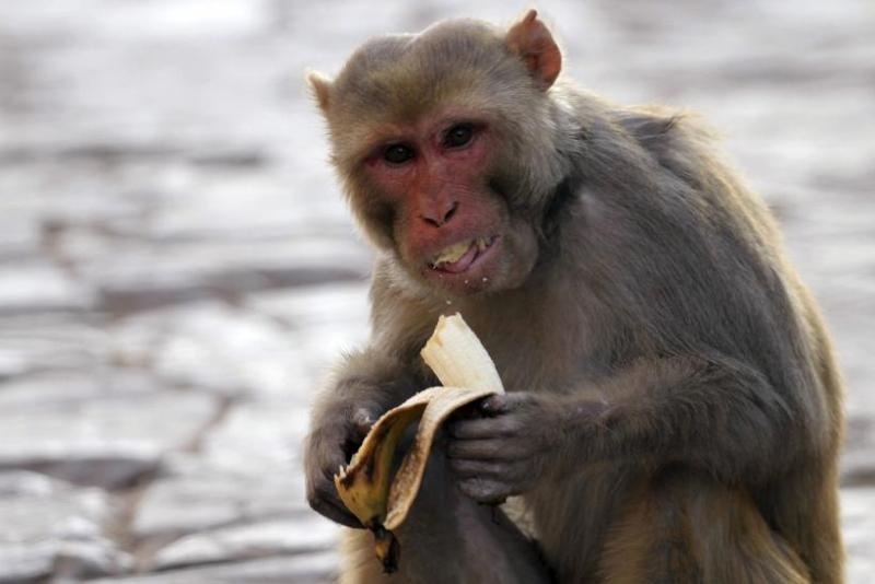 https: img-z.okeinfo.net content 2019 09 18 338 2106582 diserang-monyet-liar-bocah-7-tahun-alami-luka-parah-oJ1abbduqp.jpg