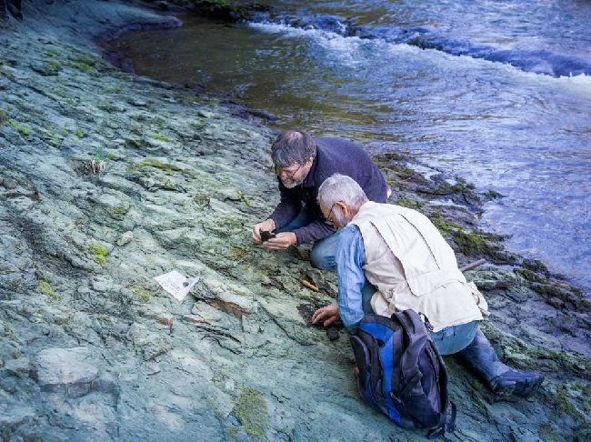 https: img-z.okeinfo.net content 2019 09 18 56 2106487 ilmuwan-temukan-fosil-burung-tertua-di-dunia-32hDrVx2rG.jpg