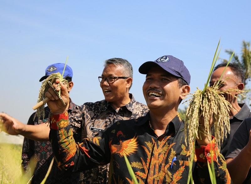 https: img-z.okeinfo.net content 2019 09 20 1 2107396 pangsa-pasar-beras-ketan-hitam-organik-indonesia-masih-terbuka-luas-eksportir-tertarik-kembangkan-beras-ketan-hitam-bandung-MzvfKYg2Ac.jpg