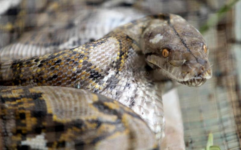 https: img-z.okeinfo.net content 2019 09 20 337 2107315 viral-aksi-menegangkan-penangkapan-ular-di-plafon-rumah-3YxfHgObvy.jpg