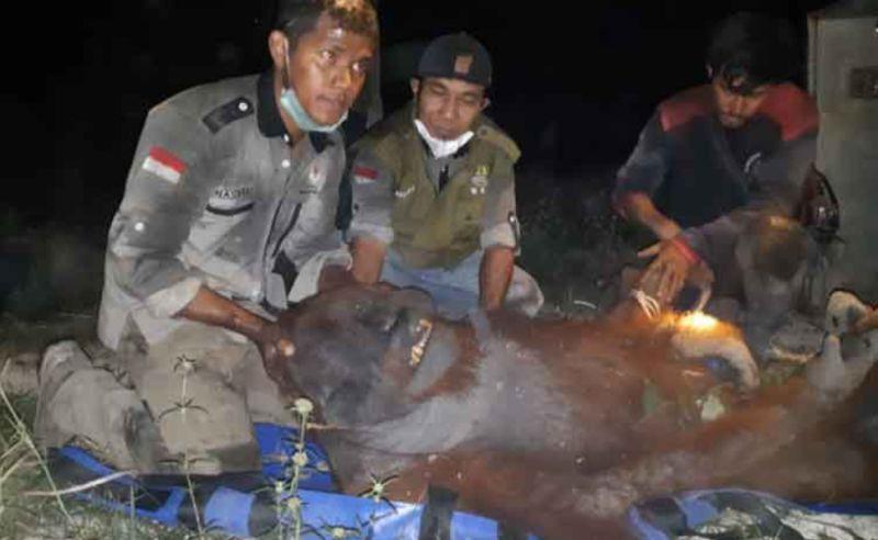 https: img-z.okeinfo.net content 2019 09 20 337 2107390 evakuasi-orangutan-terjebak-karhutla-di-kalimantan-berlangsung-dramatis-R2JTeC7osp.jpg