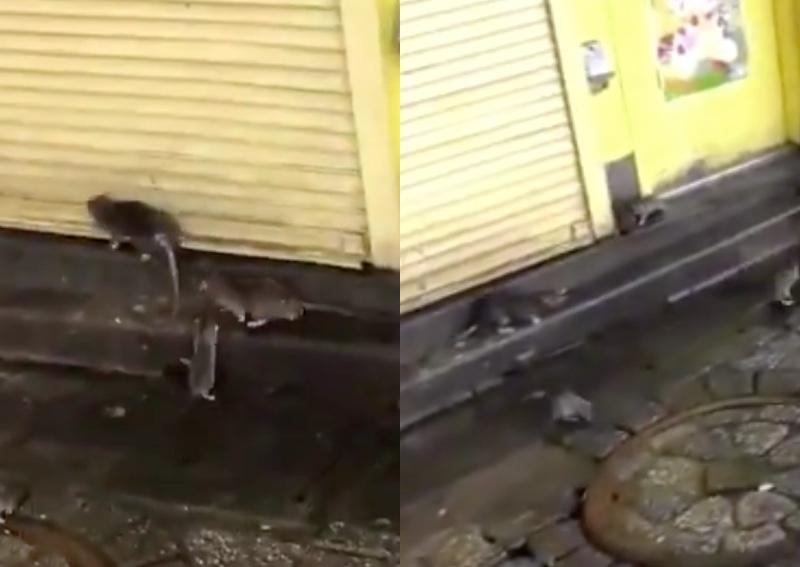 https: img-z.okeinfo.net content 2019 10 14 18 2116745 video-viral-tikus-penuhi-jalanan-tokyo-pasca-terjangan-topan-hagibis-w00HPREIl5.jpg