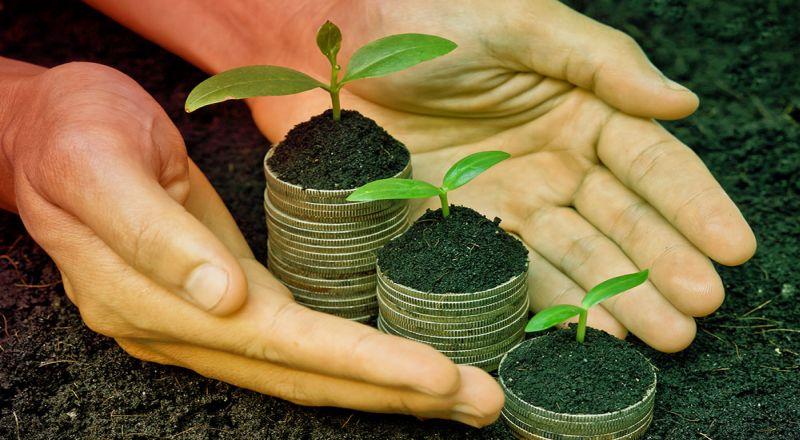 https: img-z.okeinfo.net content 2019 10 15 470 2117296 tanaman-uang-mampu-tingkatkan-finansial-jangan-harap-berikut-fungsi-sebenarnya-DtirofyeHY.jpg