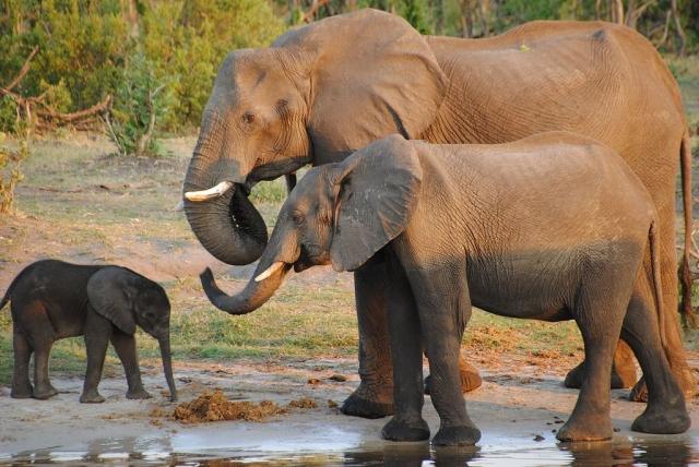 https: img-z.okeinfo.net content 2019 10 23 18 2120912 berlian-dan-gajah-berperan-penting-tentukan-pemenang-pemilu-bostwana-5x0XTADsBL.jpg