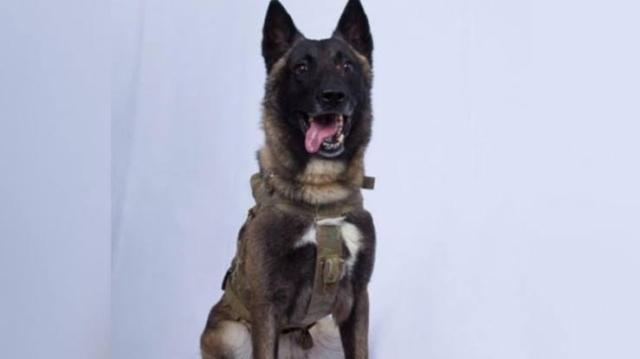 https: img-z.okeinfo.net content 2019 10 29 18 2123139 inilah-anjing-pahlawan-dalam-perburuan-pemimpin-isis-abu-bakr-al-baghdadi-yJhbEKnlAG.jpg