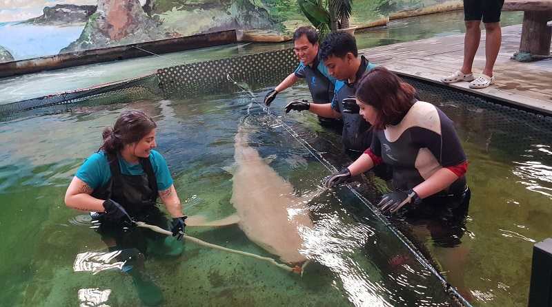 https: img-z.okeinfo.net content 2019 11 04 406 2125493 sensasi-berendam-bersama-ikan-pari-dan-hiu-di-irukandji-shark-and-ray-encounters-HMpQ6IV0DC.jpg